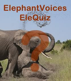 Elephant Quiz. Photo: ElephantVoices.