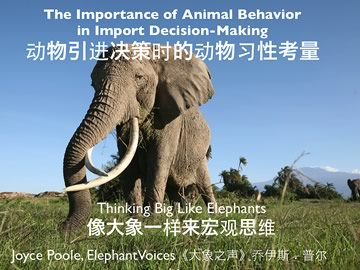 Joyce in China - please share our ivory trade campaign!