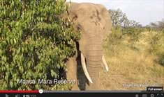 ElephantVoices Video Database