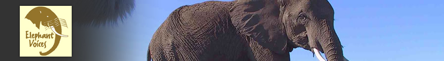 ElephantVoices mission is to inspire wonder in the intelligence, complexity and voices of elephants, and to secure a kinder future for them through research and the sharing of knowledge.