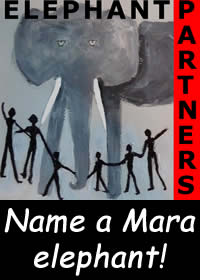 Link to ElephantVoices - Name an Elephant