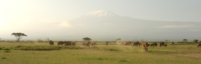 Photo taken from Amboseli towards Kilimanjaro. (©ElephantVoices)