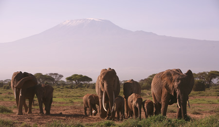 Hazel and  family in front of Kilimanjaro.  (©ElephantVoices)