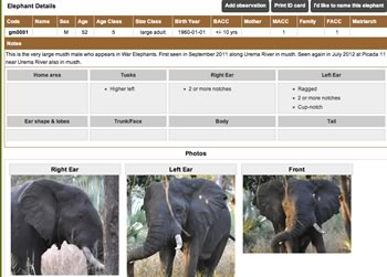 "Screenshot of the Digital ID Card for gm0001, ""Gogogo"" from the Gorongosa Elephants Whos Who ID Database. The database is not made available to the public. We built a similar database portal and EleApp for smartphones for data collection for our citizen science conservation initiative Elephant Partners in the Maasai Mara, Kenya."