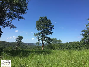 Several regions in Brazil offer the year-round temperatures that allow elephants to be outside, day and night, 365 days a year. Also the diverse flora and biodiversity, with a variety of grasses, vines, shrubs, bushes and trees, is ideal for elephants.