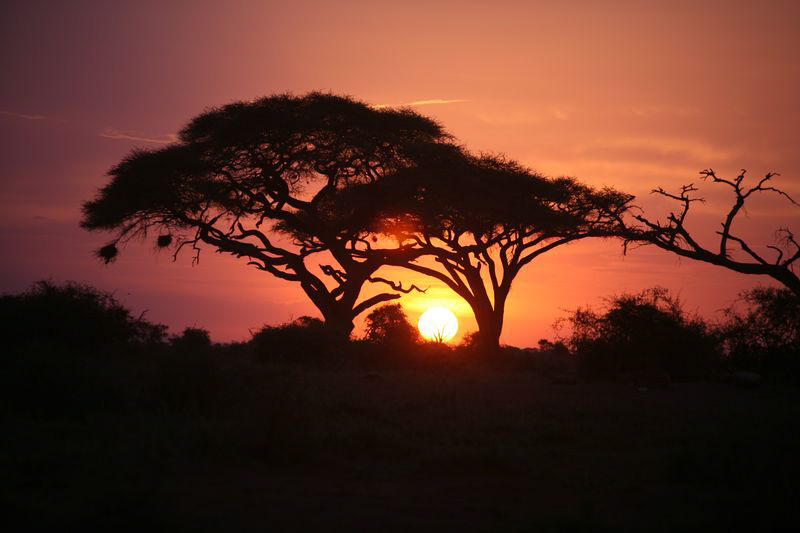 Another  beautiful Amboseli sunset. (©ElephantVoices)